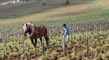 L'âme du vin documentaire