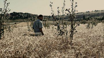 Le Grain Et L'ivraie 7